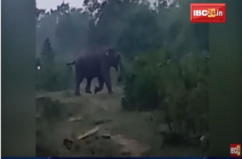 हाथियों का उत्पात, डांड़केसरा गांव में 3 मकानों को तोड़ा, फसलें चट.. दहशत में ग्रामीण