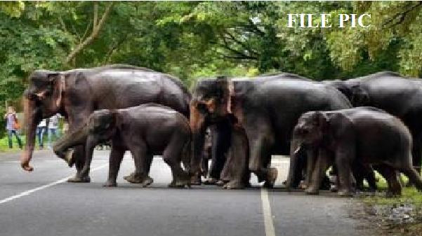 बालोद में हाथियों की आमद, फसलों और मकानों को पहुंचाया नुकसान, 6 से ज्यादा गांव में अलर्ट