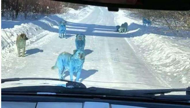नीला हो रहा कुत्तों का रंग, क्या यह हवा-पानी में फैलते जहर का असर है?