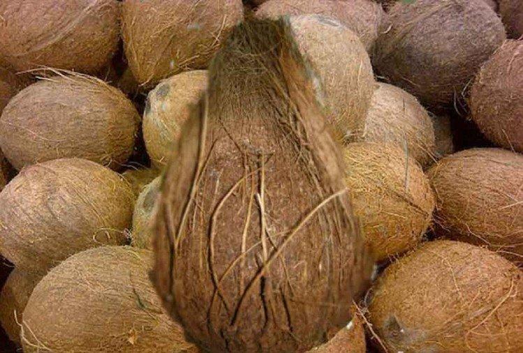 मंदिर में 'दिव्य' नारियल की हुई नीलामी, फल विक्रेता ने 6.5 लाख में खरीदा, ये है खासियत